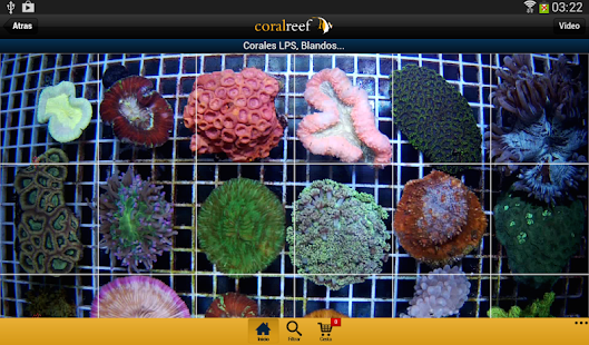 Coral Reef- screenshot thumbnail