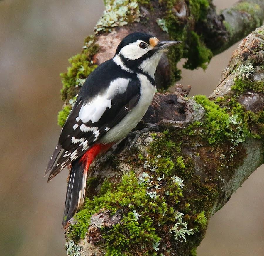 by Dirk Van den Berghen - Animals Birds