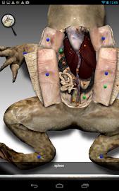 Froguts Frog Dissection Screenshot 10