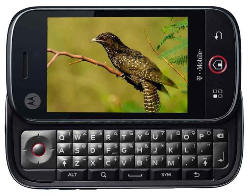 Australian Bird Sounds