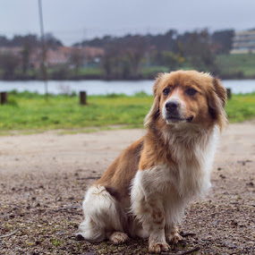 Little smile by Ricardo  Guimaraes - Animals - Dogs Portraits ( nature, beautiful, cloudy, friendly, portugal, cute, dog, small, portrait, river,  )
