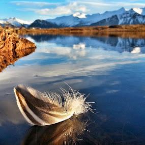 Auđvitađ kemur mynd frá mèr međ fjöđur :D by Linda Ragnarsdottir - Nature Up Close Other Natural Objects ( #iceland   #nature   #sky, #iceland #nature #sky #water, , Free, Freedom, Inspire, Inspiring, Inspirational, Emotion )
