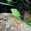 insecto hoja