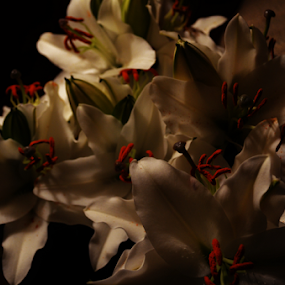 White Lilies by Alan Hammond - Flowers Flower Arangements ( flowers arrangements, flowers )