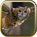 Owl Puzzle Games icon