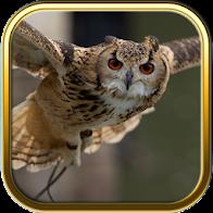 Owl Puzzle Games