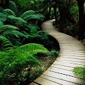 ジャングルのライブ壁紙 icon