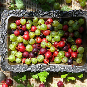gooseberry by Tatyana Obuhova - Nature Up Close Gardens & Produce