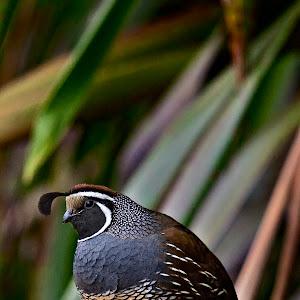 Zealandia Bird.jpg