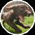 Animal Sounds Lite file APK Free for PC, smart TV Download