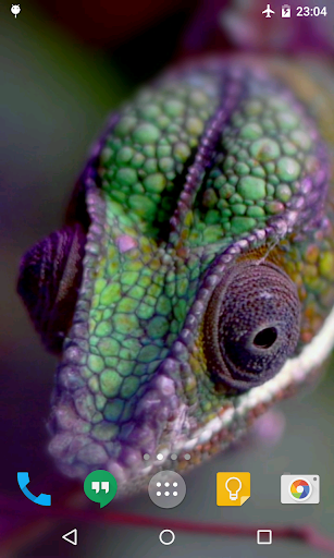 Chameleon Live Wallpaper