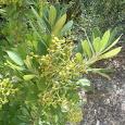 Plantastic: Flora of the Los Angeles Area (F Block)