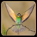 أجمل خلفيات الطيور icon