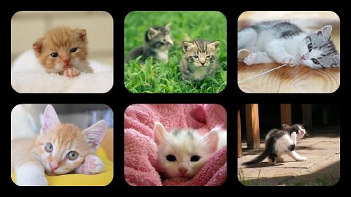 Kitten Jigsaw Puzzles