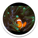MiUI Clown Fish Live Wallpaper icon