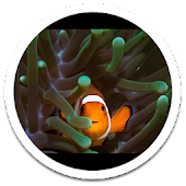 MiUI Clown Fish Live Wallpaper