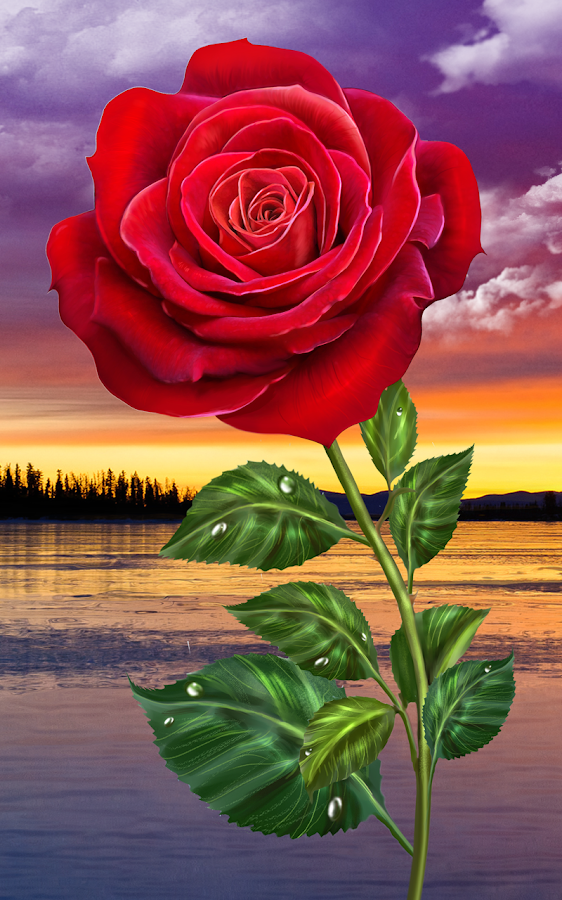 Rose magic touch flowers android apps on google play - Rose flowers wallpaper for mobile ...