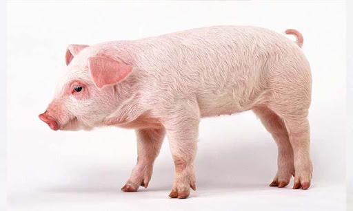 玩娛樂App|New Pig and Eggs Official免費|APP試玩