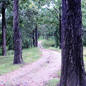 Road through Forest by Dola Soma Sekharam - Landscapes Forests ( deep woods, thick green, forest, road, tall trees,  )