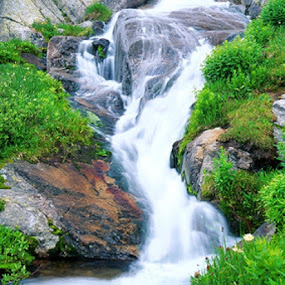 Waterfall through greens by Suvra Roy - Nature Up Close Trees & Bushes (  )
