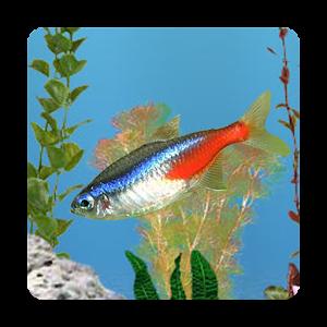 aniPet Freshwater Aquarium LWP download