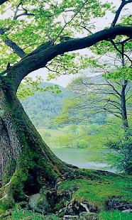 英國風景壁紙