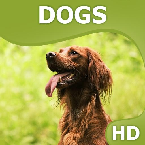 Dogs wallpapers HQ 個人化 App LOGO-APP試玩