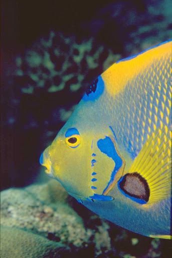 tropical-fish-Aruba - Aruba is known for turquoise waters teeming with tropical-colored fish.