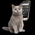Cat Ringtones icon