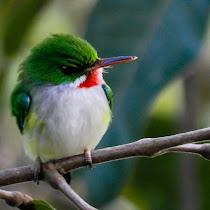 Puertorrican Birds
