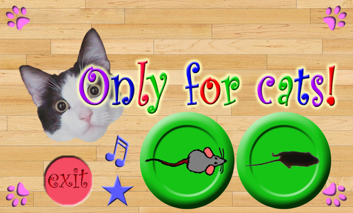Only For Cats