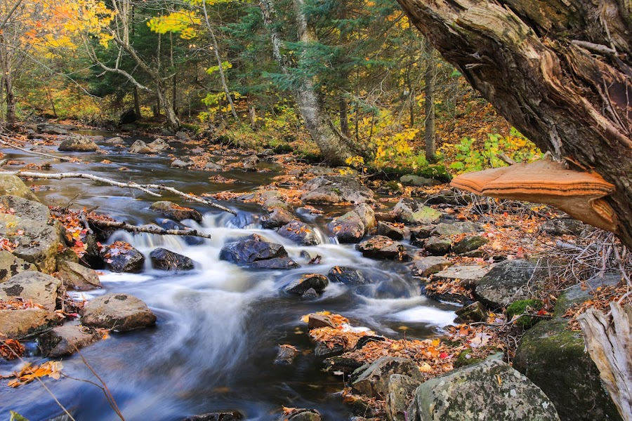 Autumn and a Creek by Roberta Janik - Landscapes Waterscapes ( autumn foliage, autumn, fall foliage, fall, creek, trees, fungus, leaves, fall colour, autumn colour, river, color, colorful, nature )