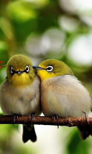 小鳥動態壁紙