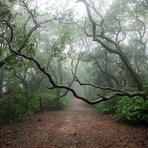 nature6.jpg