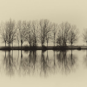 Reflections by Albergamo Paolo - Landscapes Beaches ( beaches, reflection, paolo albergamo, nature, oasi )
