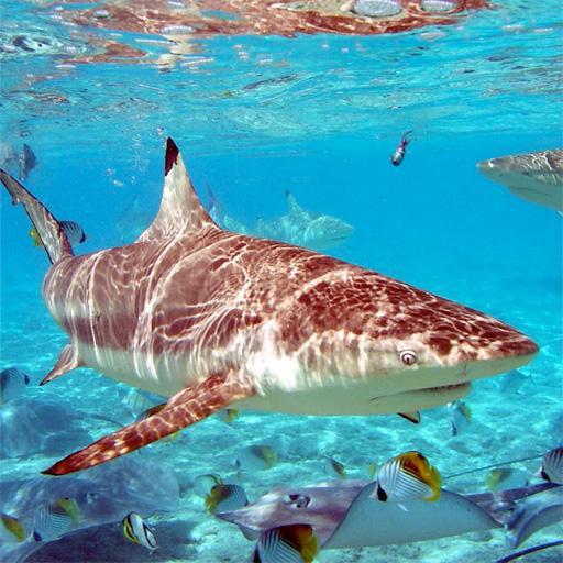 鯊魚圖片 娛樂 App LOGO-APP試玩