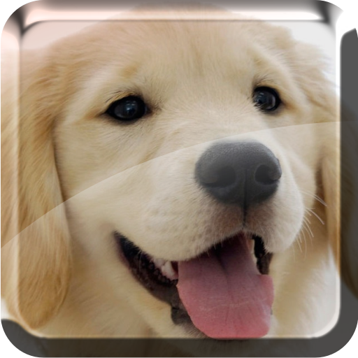 Puppies Live Wallpaper