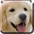 Puppies Live Wallpaper file APK Free for PC, smart TV Download