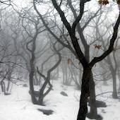 Dreamy Winter Scenery