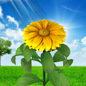 3D Sun Flower Live Wallpaper