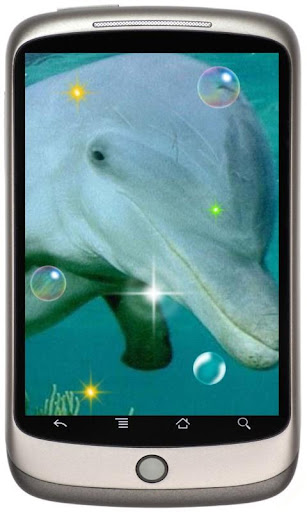 Friendly Dolphines HD LWP