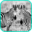 Zebra Wallpaper icon