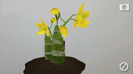 黃金天鵝蘭