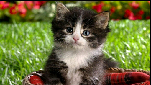 Stunning Cats Wallpapers