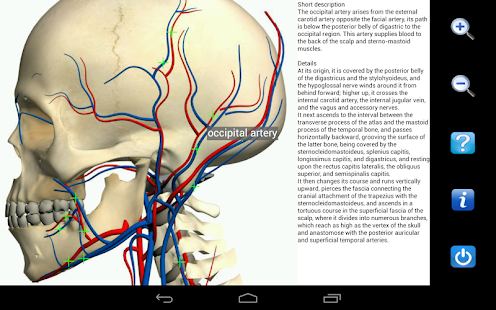 Visual Anatomy- screenshot thumbnail