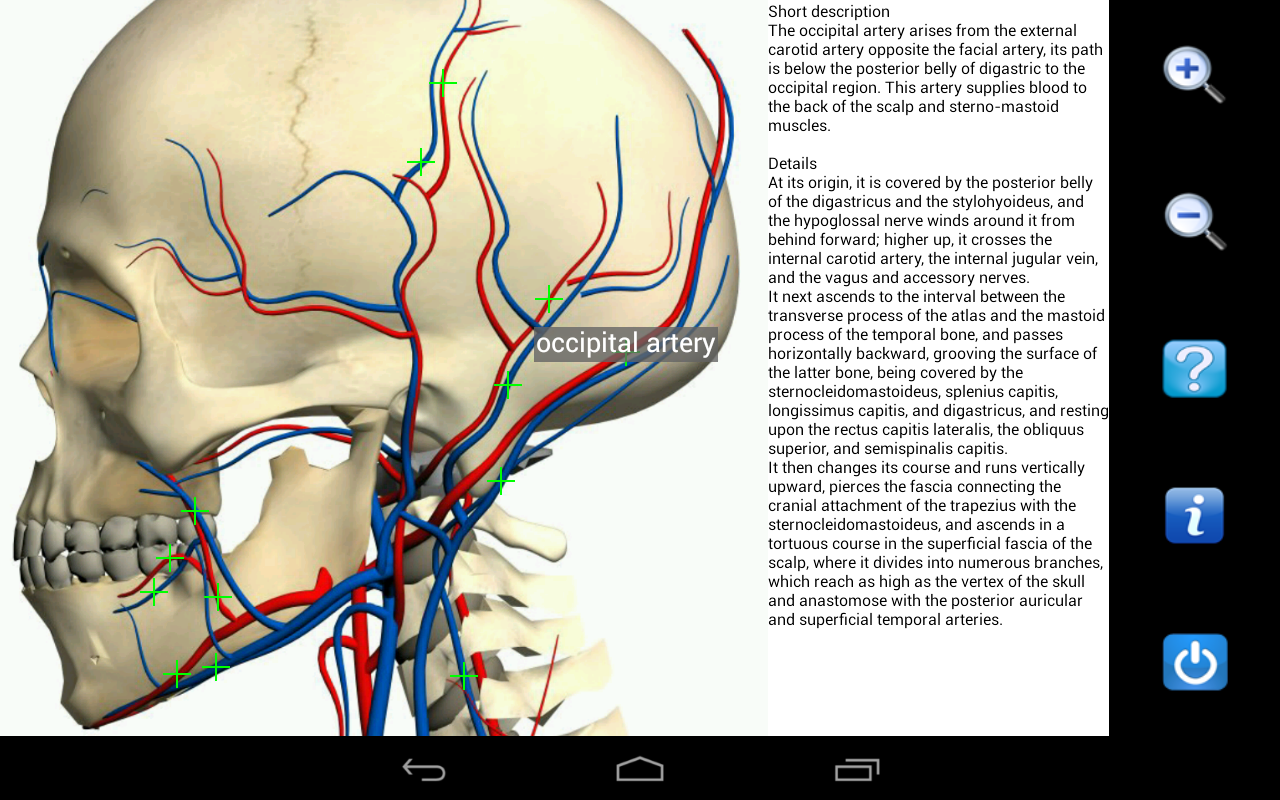 Visual Anatomy - screenshot
