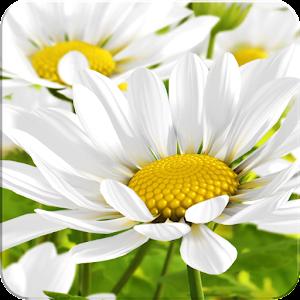 My Flower lLWP 個人化 App LOGO-APP試玩