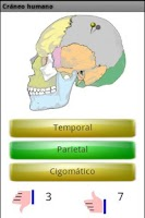 Screenshot of Learn the bones