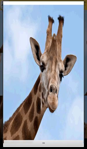 Giraffes Games