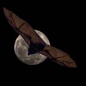 Haloween by Gary Tindale - Uncategorized All Uncategorized ( haloween, moon, lunar, night, bat,  )